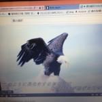 鷹(私)の選択